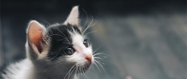 宠物被当盲盒,灰产背后谁在赚黑心钱?